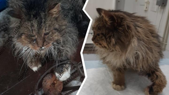 «Миша плакал от боли»: под Ярославлем кот попал в капкан живодёра