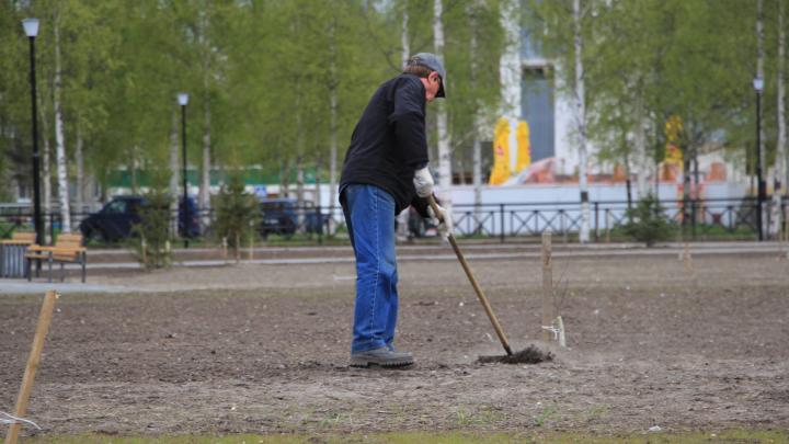 В Архангельске пройдёт голосование за территории, которые могут благоустроить в 2021 году