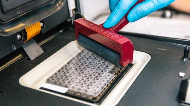 Лаборатории перегружены: приостановлен прием мазков на коронавирус