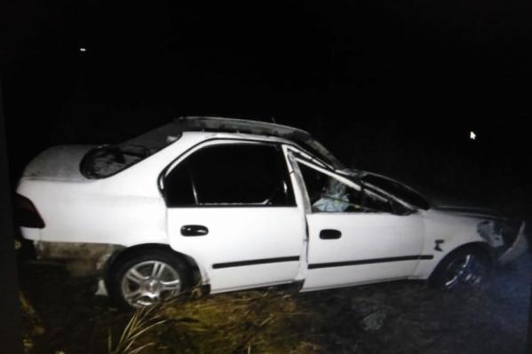 Лось упал на автомобиль и тушей придавил находившихся в нем людей