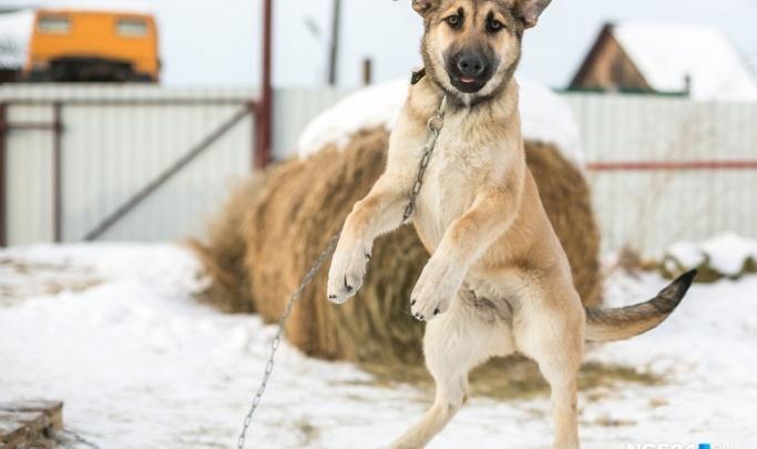 Волонтёры нашли на берегу Качи труп собаки и её изуродованных щенков