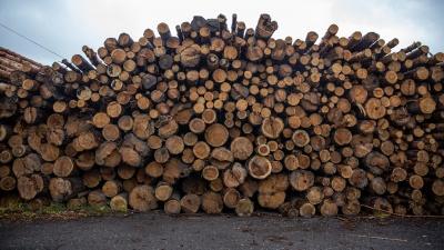 С начала года в Кузбассе вырубили тысячи гектаров леса. Рассказываем, сколько это в городах и стадионах