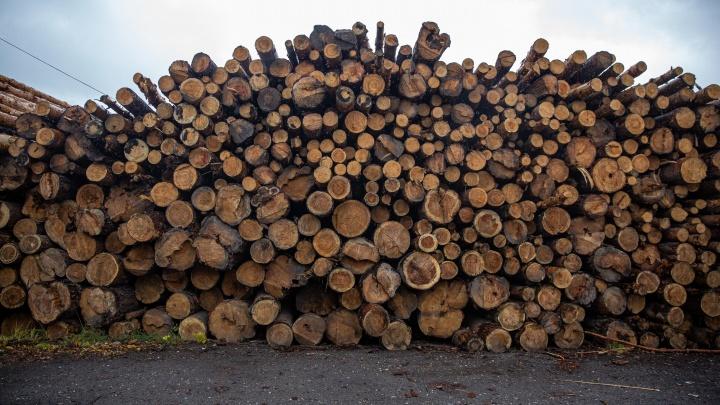 За год в Кузбассе вырубили тысячи гектаров леса. Рассказываем, сколько это в городах и стадионах