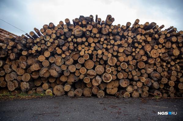 Древесину и изделия из нее власти экспортируют в Китай, Ближний Восток и соседние регионы