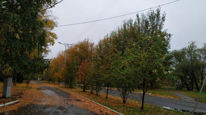 В Курган пришли похолодание и дожди