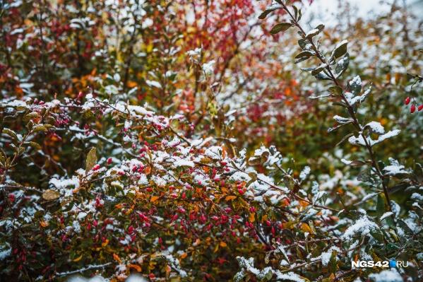 В конце недели в Кузбассе ожидается снег