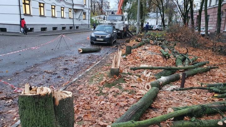 «Самое настоящее варварство»: на тихой улочке в центре Ярославля спилили клёны
