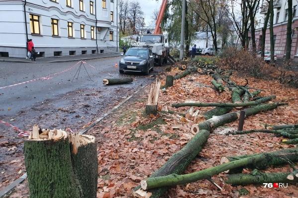 Деревья спилили возле офиса компании «ТГК-2»