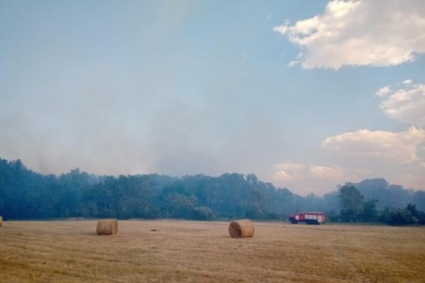 В июне и июле из-за пожаров были уничтожены посевы в Волгоградской области
