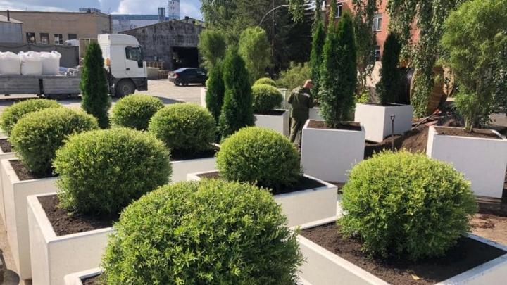 «Закроют ими забор»: в центре Челябинска установят бетонные клумбы с деревьями