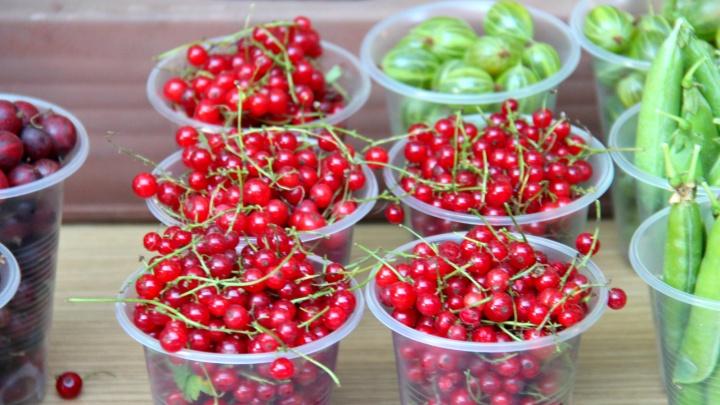 Ведерко за 250: обзор уличных рынков Новосибирска, где можно купить вкуснейшие ягоды и овощи