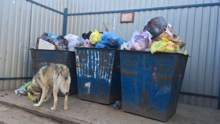 В Котласе не вывозят мусор из контейнеров во дворах. Видео