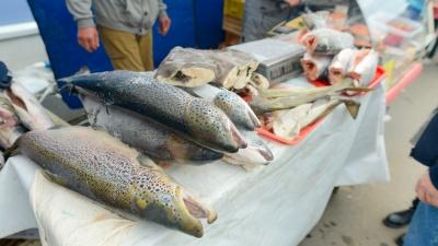 На Маргаритинке будет два рыбных базара: гости жаловались, что не всем удобно ехать до «Норд Экспо»