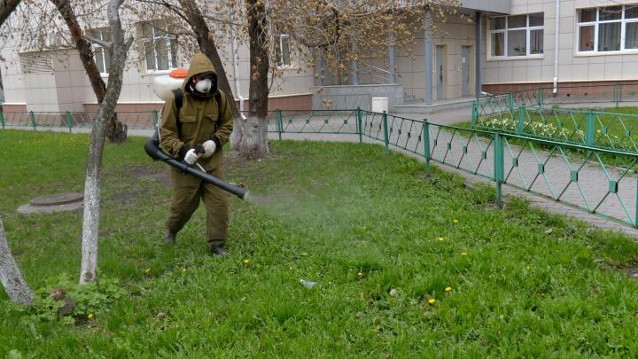 В Екатеринбурге начали обрабатывать от клещей парки и скверы