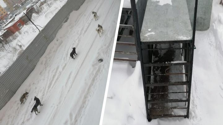 На Ключ-Камышенском плато поставили ловушки для собак — жители боятся животных уже полтора года