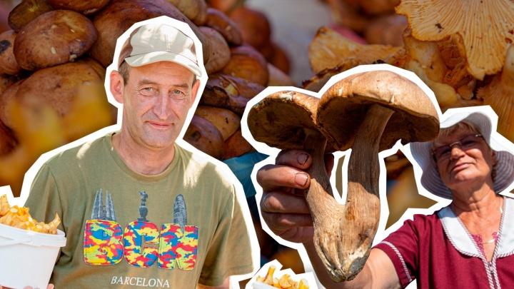 Лисички — из Мишкино, белые — из Чебаркуля: какие грибы продают на рынках и сколько они стоят