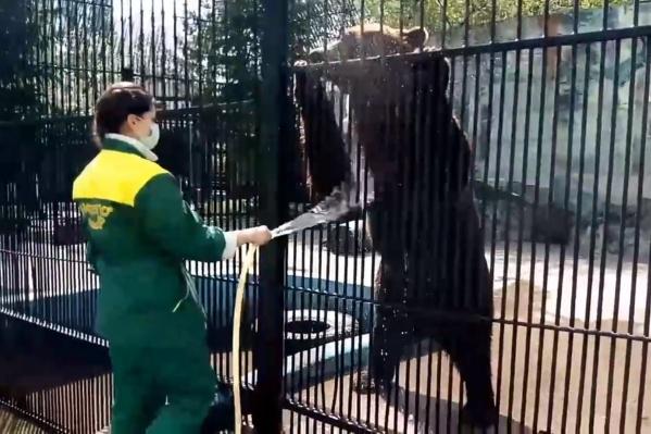 Сложно представить, как жарко медведям в такую погоду