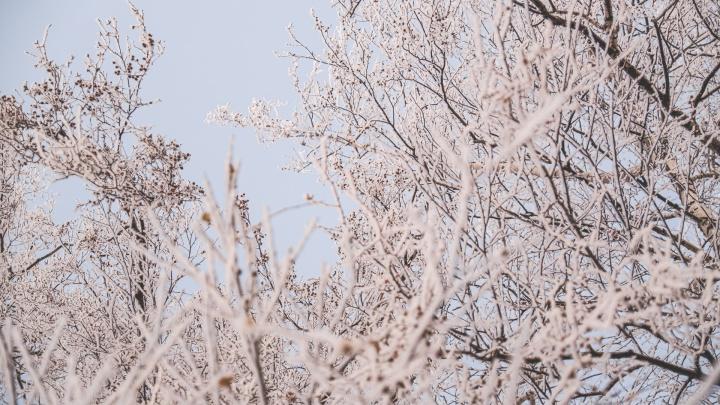 Пермь покрылась инеем и выглядит по-настоящему сказочно. Публикуем зимний фоторепортаж