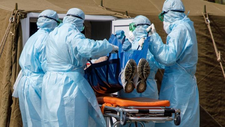 За сутки 55: в НСО количество заражённых коронавирусом перевалило за 500