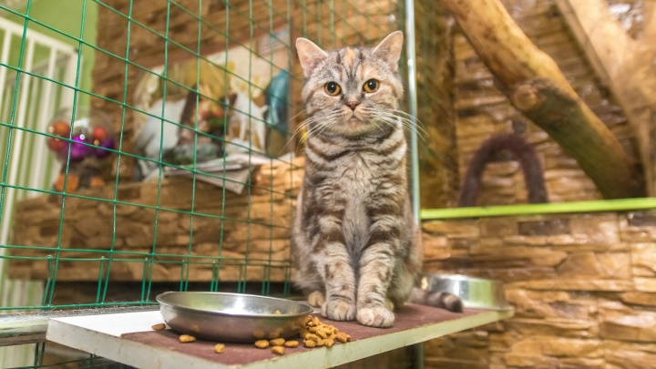 В Самарской области домашних животных предложили отправить на самоизоляцию