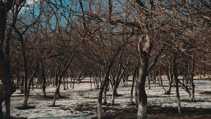 Очень жарко для марта: Тюмень вновь побила абсолютный температурный рекорд