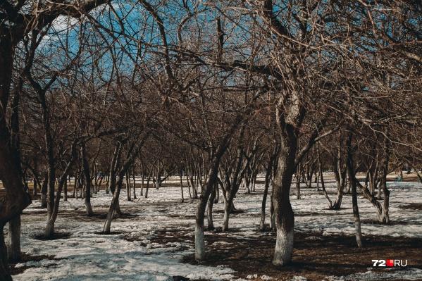 Вслед за теплой зимой в Тюмень пришла теплая весна