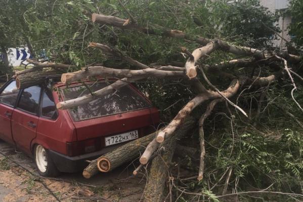 Эту машину на Мичурина буквально завалило деревьями