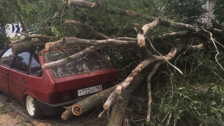 Мэрия Самары насчитала в городе 35 упавших деревьев