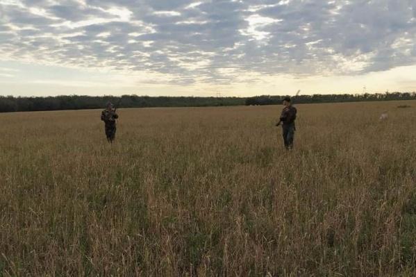 Сезон охоты на перепелов закроется 31 октября