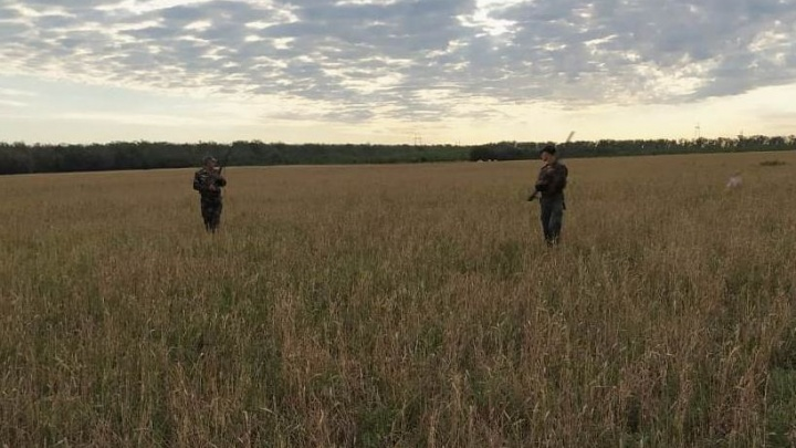 Сезон охоты на перепелов открылся в Ростовской области