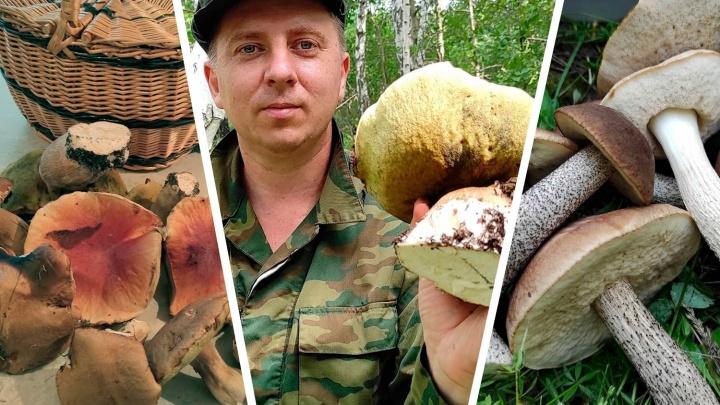 В Челябинской области пошли подберёзовики, подосиновики и белые. Карта самых грибных мест