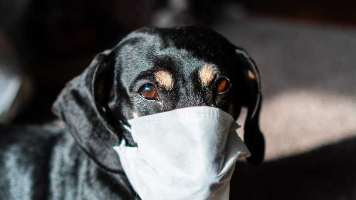 Карантин по гриппу в Омске продлили минимум на неделю