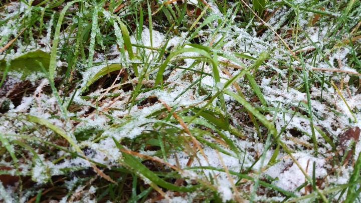 В большинстве районов Архангельской области в выходные и на следующей неделе пройдут снег и дожди