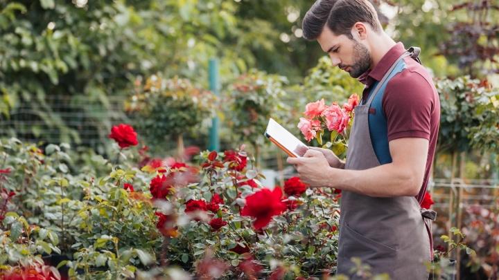 Дачный сезон на самоизоляции: красноярцы предпочли путешествиям огород и стройку