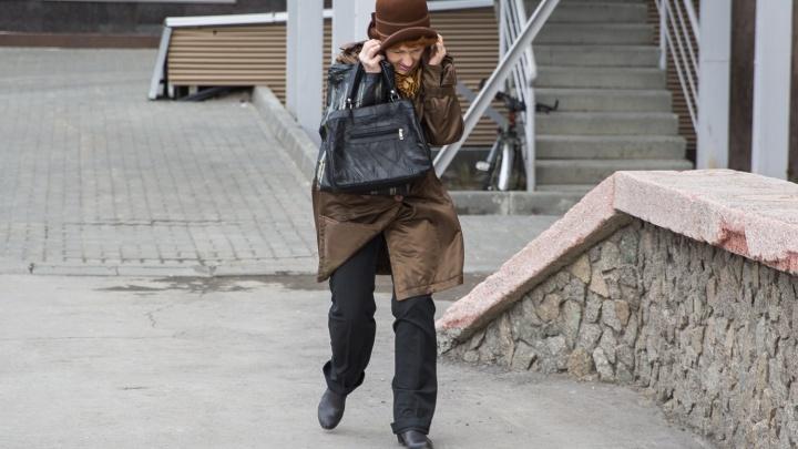 На Новосибирск идет сильный ветер: порывы будут достигать до 20 м/с