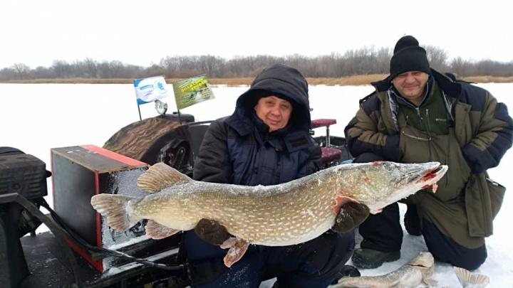 Чудо-рыба: в Самарской области рыбак поймал щуку весом больше 10 килограмм