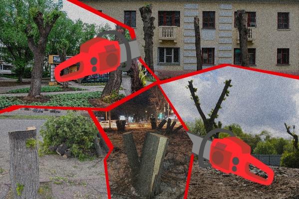 В серии публикаций мы расскажем, как Челябинск выпиливает свою зелень, почему так много мёртвых деревьев и зачем вместо них высаживают вички