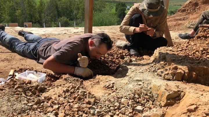Питерские ученые нашли в Кузбассе новые останки динозавров