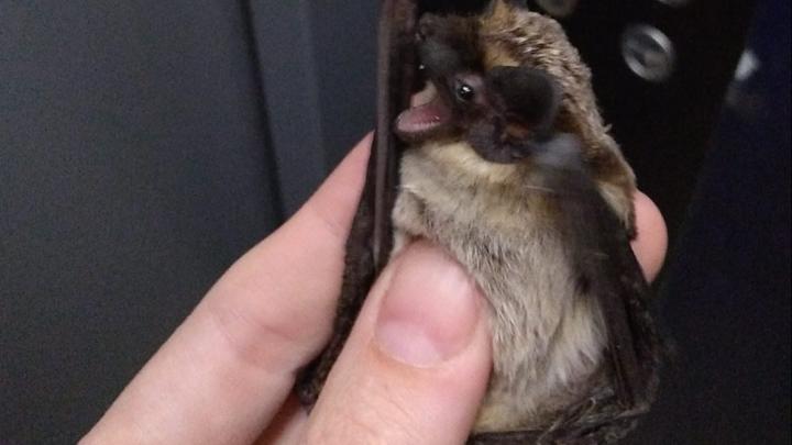 Тюменка, опасаясь коронавируса, убила летучую мышь. Почему так нельзя делать