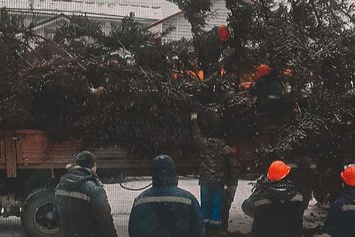У библиотеки Астафьева в Овсянке вырубают огромные ели