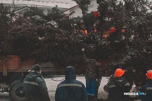Ель погрузили на фуру и повезли в Дивногорск