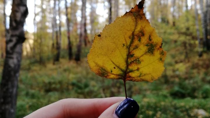 Снег и первые морозы: синоптики рассказали о погоде в Кузбассе в октябре