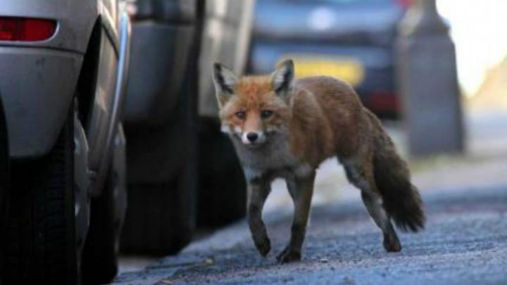 Дикие животные в городе: коронавирус изменил экологию