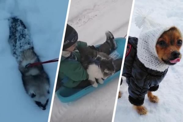 Некоторые животные успели оценить плюсы снежной погоды