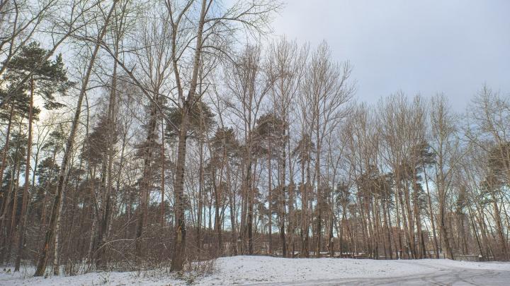 Где в Перми покататься на лыжах. Публикуем карту лесных трасс