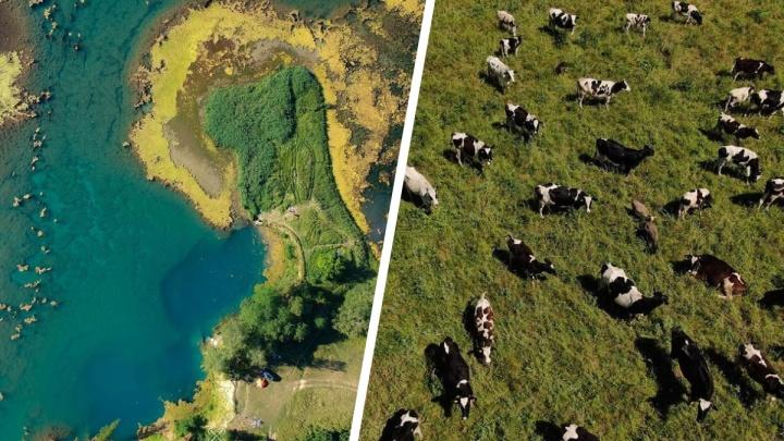 Лучшие фото недели: смотрим на нижегородское чудо-озеро и поле бурёнок