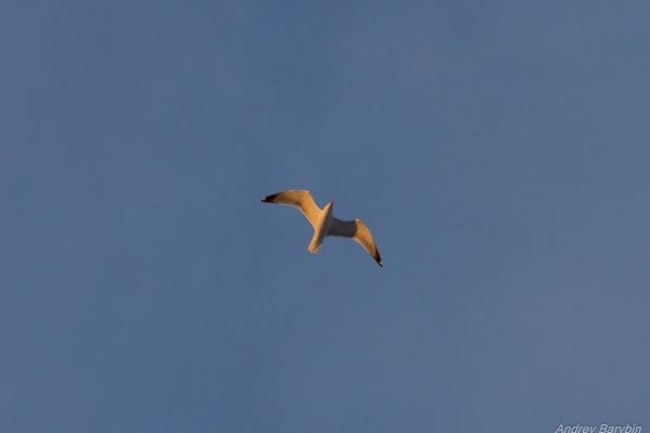 Птицы регулярно возвращаются в наш город в третьей декаде марта