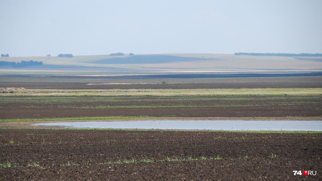 На одном из полей — непросыхающая лужа. Результат аномальных дождей в начале августа