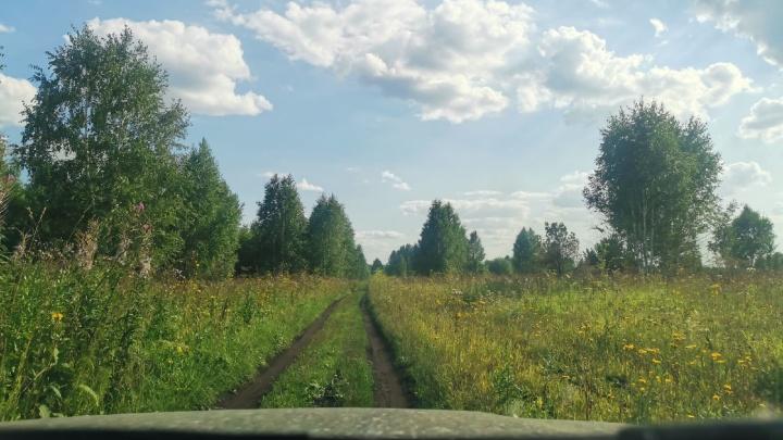 В Кузбассе стали меньше рубить лес незаконно
