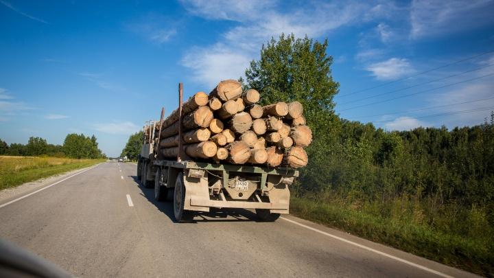 Житель Киргизии пойдёт под суд за дачу взятки — он пытался незаконно вывезти лес из Новосибирской области